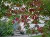 9月初旬の紅葉