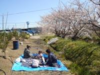 桜もうすぐ満開!!!