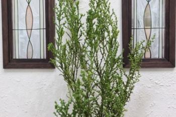 ドールハウス シンボルツリー 庭