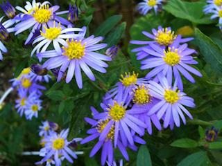 flower05.jpg