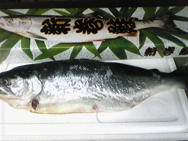 北海道産紅鮭