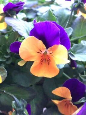 はるべ harube 花