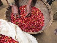 エチオピアの写真2mini.png