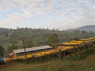 エチオピアの写真4mini.png