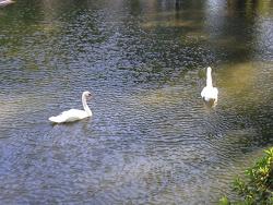 2014-0806-公園-1