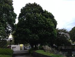 2014-0926-kanuma-2