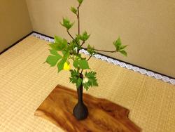 2015-0415-お花