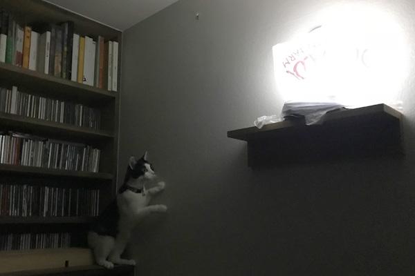 ランプが気になる