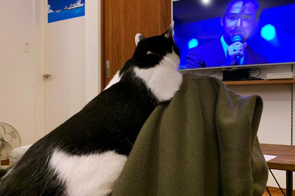 ララランドと猫