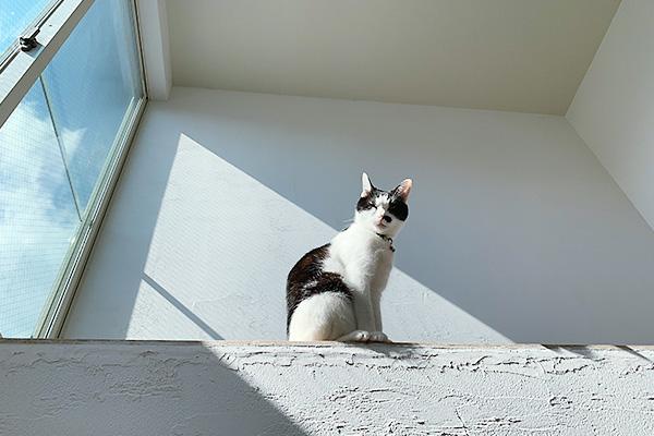 日差しと猫