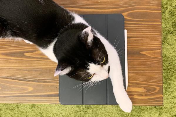 iPadと猫
