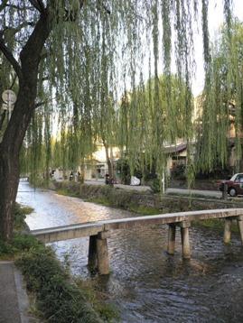 京都の小道と柳