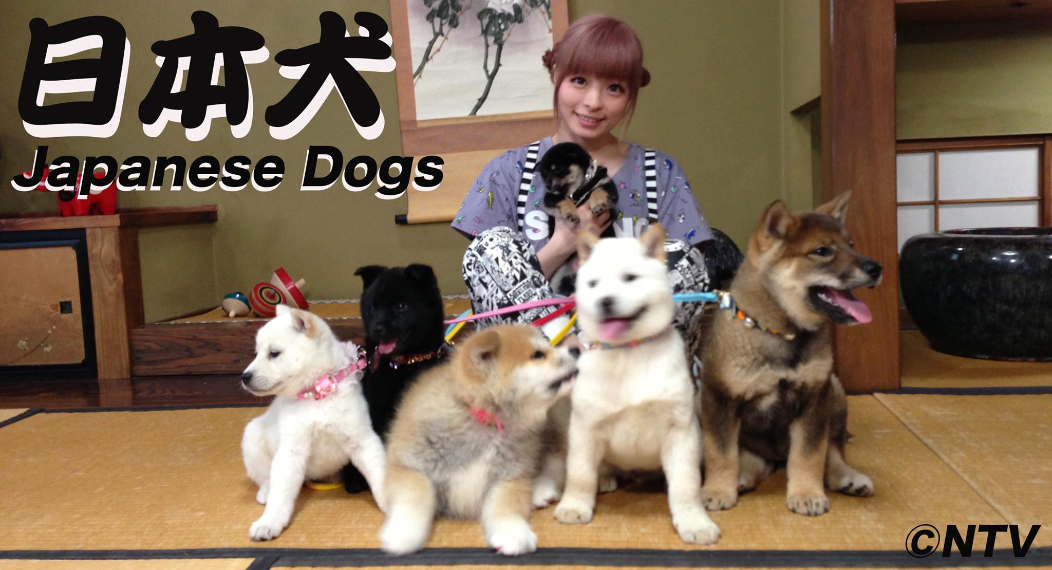 日本犬の里のロケ地となった場所はどこ?アクセス …