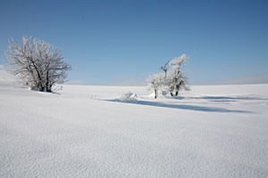 シバレた朝の川西の丘