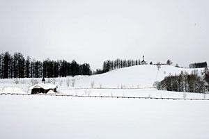 昨年の美瑛の丘