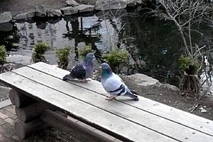 鳩もベンチでひなたぼっこ
