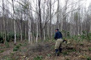 山林の笹刈り作業