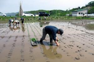 きたごりんファームでの田植え作業