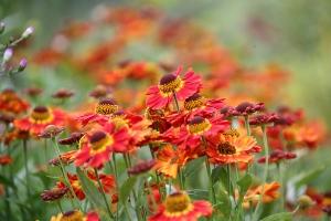 「大雪 森のガーデン」で咲いていた花たち