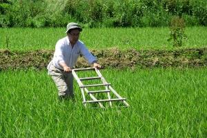 ハッタンといわれる道具で除草作業