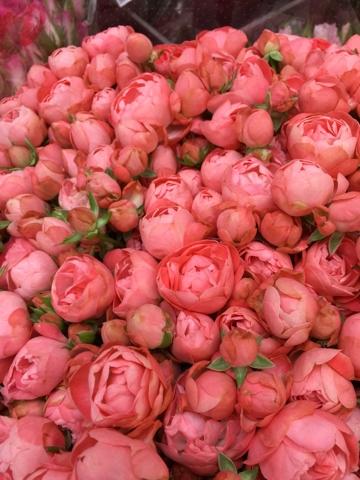 2015年04月15日の記事   もっと身近に花と緑を…。 横浜の花問屋 ...