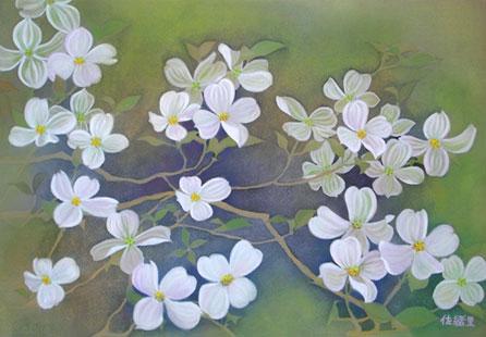 花水木:白