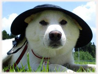 帽子を被せられた福ちん