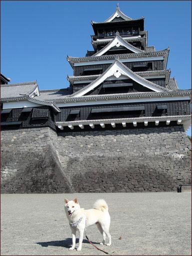 熊本城と福ちん�