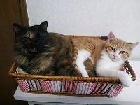 先輩猫とも仲良し♪