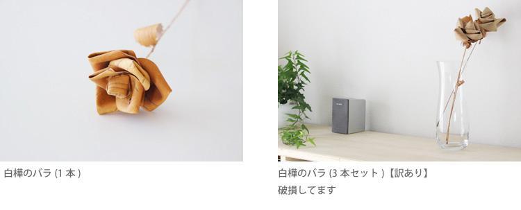 モミの木20171206_03.jpg