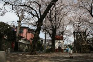 桜咲く公園で☆