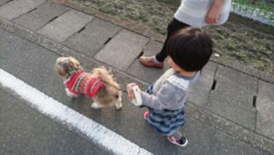 初!犬の散歩