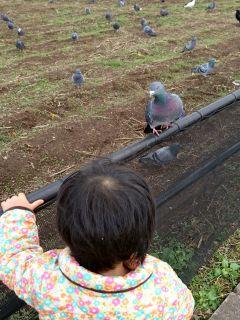 鳩とおはなし