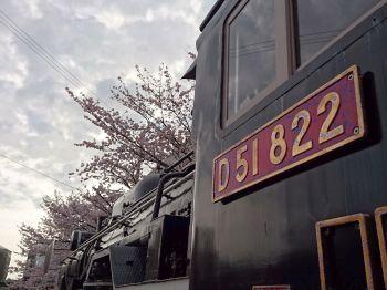駅前の桜も満開