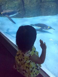 ペンギンがお気に入り