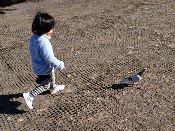鳩を追いかけるin山下公園