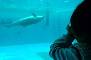イルカの窓