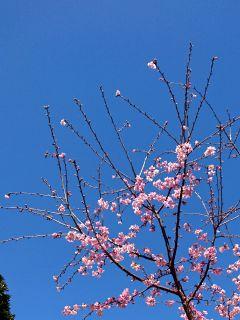 梅の花も少しずつ