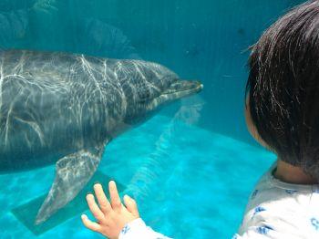 イルカとご対面