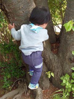 木登り挑戦中