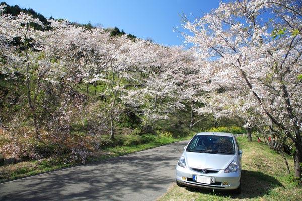 桜とMyFit