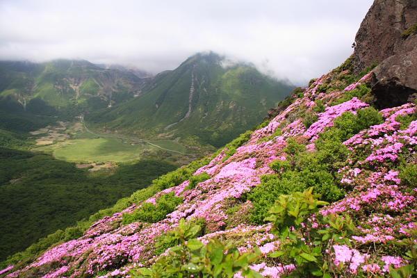 平治岳のミヤマキリシマ1