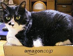 暢気なブタ猫