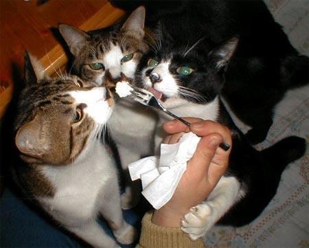 ケーキに群がる猫