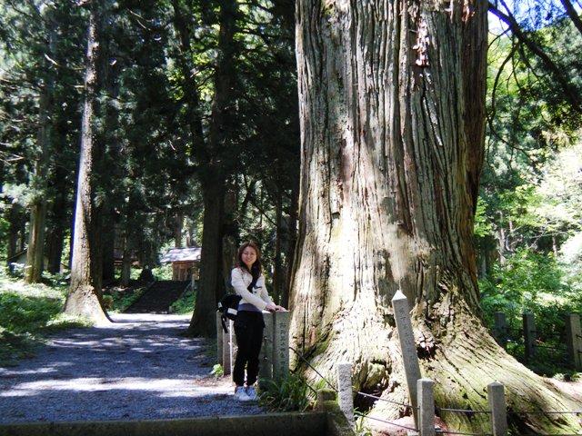 比婆山神社の杉