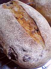 「ドライ・ブルーベリー」入りのパンです