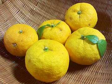 新鮮な柚子