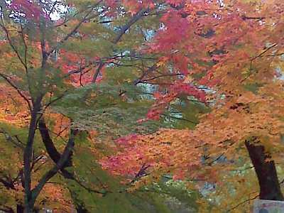 妙琴公園の紅葉
