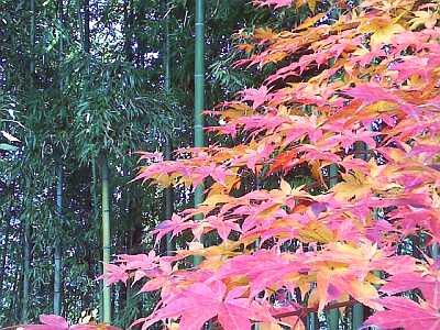 飯田市美術博物館の紅葉