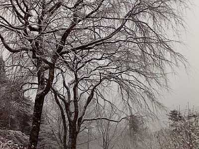 枝垂桜の木々にも。